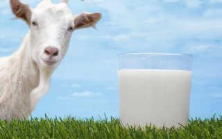 Козье молоко – польза и вред