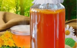 Чайный гриб: полезные свойства, противопоказания, как вырастить с нуля, ухаживать в домашних условиях