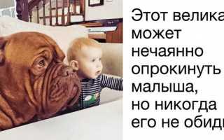 Собака для ребенка: выбираем породу