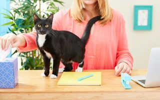 Аллергия на кошек – есть ли выход?