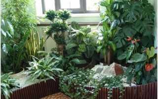 Зимний сад в квартире – это реально