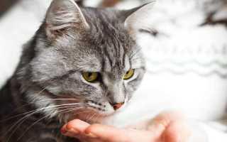 Цистит у кошек – причины и способы лечения