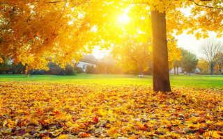 Осень – время позаботиться о себе и близких