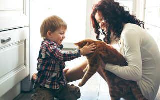 Аллергия на животных у детей – особенности, симптомы, лечение