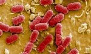 Кишечные инфекции: симптомы и лечение у детей