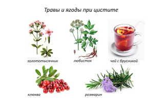 Травы при цистите – лечение при помощи лекарственных растений