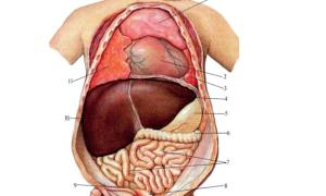 Особенности органов пищеварения у детей