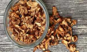 Сушка грибов в электросушилке: как правильно сушить грибы