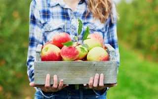Разгрузочный день на яблоках: худеем с помощью разгрузки