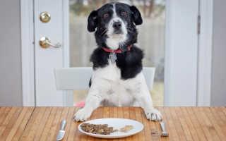 Чем кормить собаку – памятка для хозяина