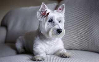 Запах мочи на диване: как избавиться, убрать, вывести кошачью, детскую, взрослую, собачью