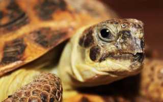 Уход за черепахами – что необходимо знать?