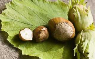 Самые полезные орехи для организма: у женщин, мужчин, детей – для сердца, сосудов